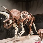 Adult and Juvenile Triceratops
