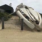 Seymour Marine Discovery Center Photo
