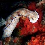 Phi Phi Divingの写真