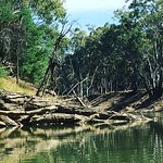 This portion of the Goulburn is not cleared, so you navigate around fallen trees. No speedboats!