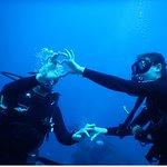 Photo of Geko Dive