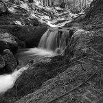 Photo de Dodd's Wood Ospreywatch