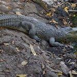 Katchikally Crocodile Pool Foto