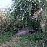 Riserva Naturale fiume Ciane Foto