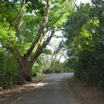 Ancon Hill - even paved path