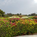 Photo of Al Mamzar Beach Park
