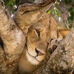 Zdjęcie Unique Safaris