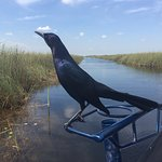 Photo of Everglades Nature Tours