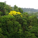 Costa Rica Rain-forest
