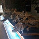 ภาพถ่ายของ พิพิธภัณฑ์สัตว์น้ำจังหวัดหนองคาย