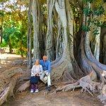 Albero secolare with it's landmark tree