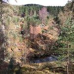 Photo of Zip Trek Park Aviemore