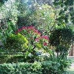Vista parcial do jardim