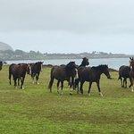 拉帕努伊國家公園照片