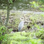See the wildlife found along the riverbanks