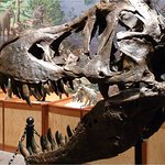 Brazos Valley Museum of Natural History