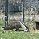 Foto de Potawatomi Zoo
