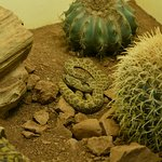 American International Rattlesnake Museum照片