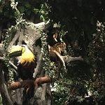 صورة فوتوغرافية لـ Rainforest Cafe