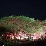 Foto de Gongendo Sakura Tsutsumi