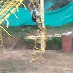 Camp Mukteshwar รูปภาพ