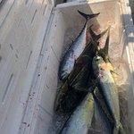 Fish box full of Mahi