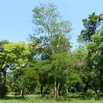 Foto de Botanical Garden and Zoo (Jardin Botanico y Zoologico)