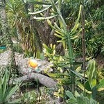 Foto Heathcote Botanical Gardens