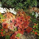 Bilde fra Heathcote Botanical Gardens