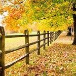 The Charlton Farm Görüntüsü