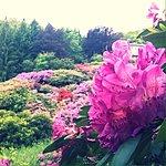 Photo de Conca dei Rododendri