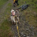 Bike dog tour is so fun and exsperiens