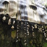 Photo de Mother Shipton's Cave and The Petrifying Well