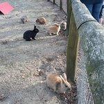 Rabbits of Rabbit Hill
