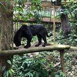 Foto de Parc des Mamelles, le Zoo de Guadeloupe
