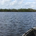 Photo of Tour The Glades - Private Wildlife Tours