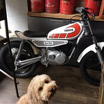 Great Sunday tapas! Elsie the dog can't wait 'fur' a ride on the TY80 too.