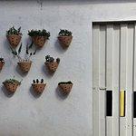 Plantas na parede do Origem Restaurante - BH