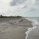 gulfside beach with plenty of stumps