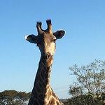 We got really close to a family of giraffe - fantastic!