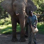 Description of the elephant