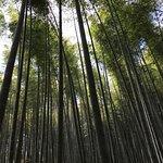 ภาพถ่ายของ The Bamboo Forest Trail