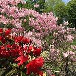 Fotografie: Botanischer Garten