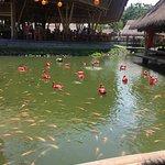 صورة فوتوغرافية لـ Bale Udang Mang Engking