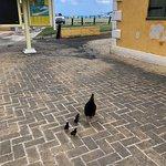 Chicks outside the Pitt