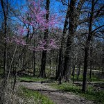 Foto de Shaw Nature Reserve