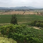 Indomita Casablanca and Maipo Vineyards Resmi