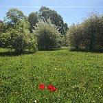 ภาพถ่ายของ Botanischer Garten (Botanical Garden of the University of Vienna)