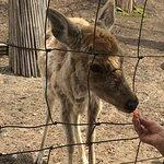 Bild från Abira Town Deers Park