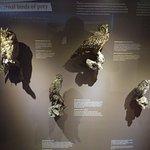 Ενδημικά πτηνά της Κρήτης